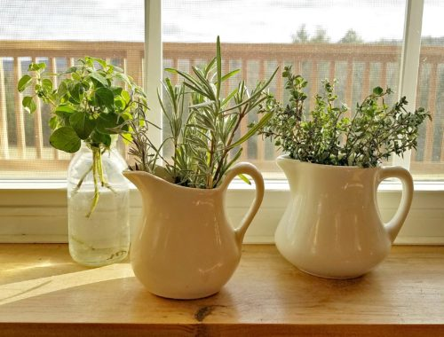 Rooting herbs in winter