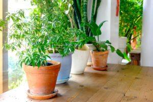 Small Space Indoor Garden