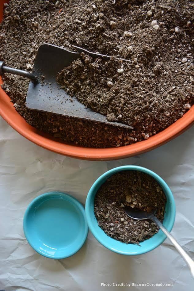 Kellogg Potting Soil is good for Succulents
