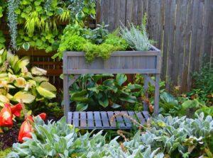 How to Grow Herbs for Tea