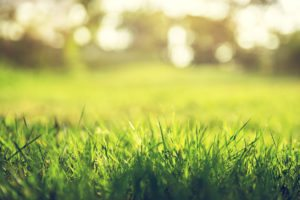 low-maintenance-grass