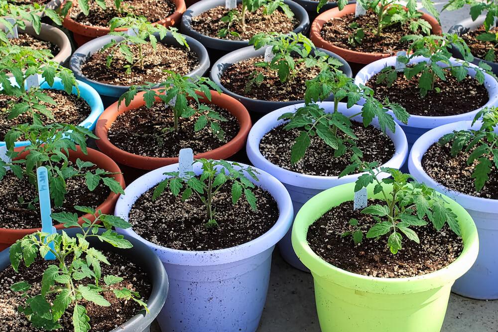 Seedlings in colorful pots.