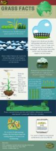Grass Facts