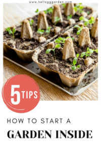 """egg cartons being used as seed starting containers with text, """"5 tips, how to start a garden inside"""""""