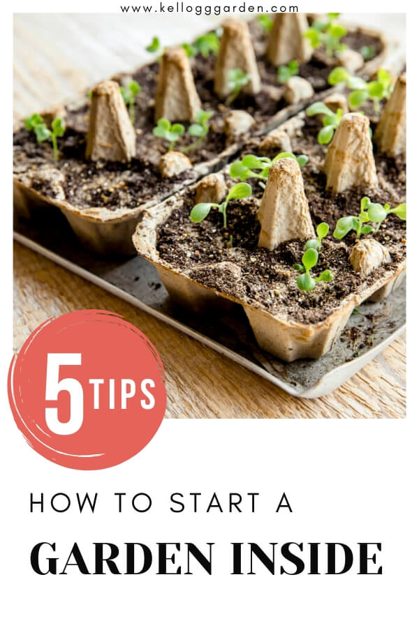 "egg cartons being used as seed starting containers with text, ""5 tips, how to start a garden inside"""
