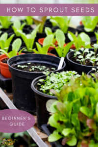 """Seedlings in pots with text, """"How to sprout seeds, beginners guide"""""""