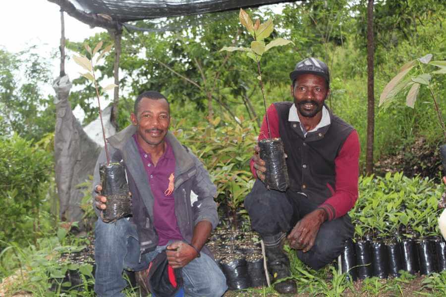 Haiti Tree Planting