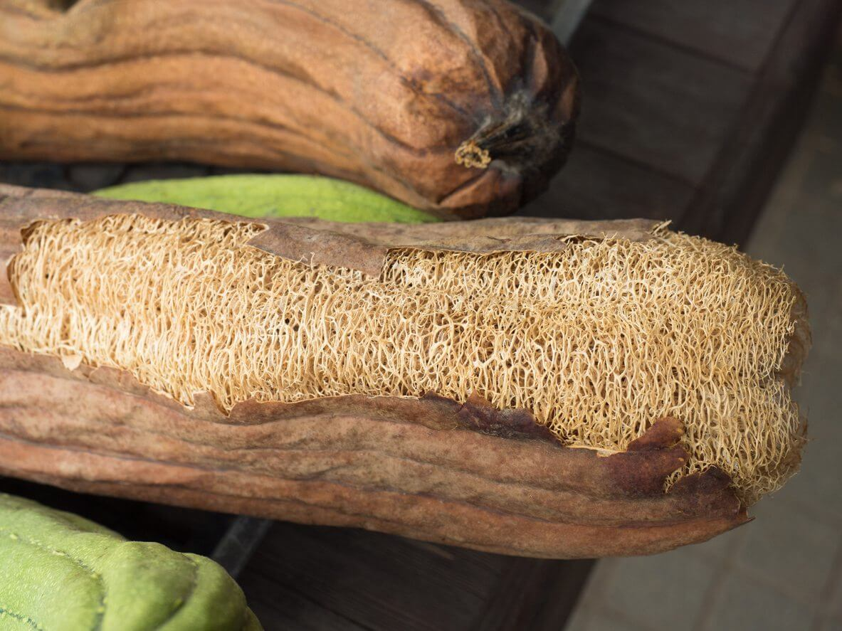 How To Grow Luffa Kellogg Garden Products