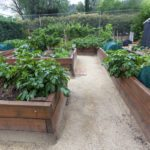 Raised Bed Design