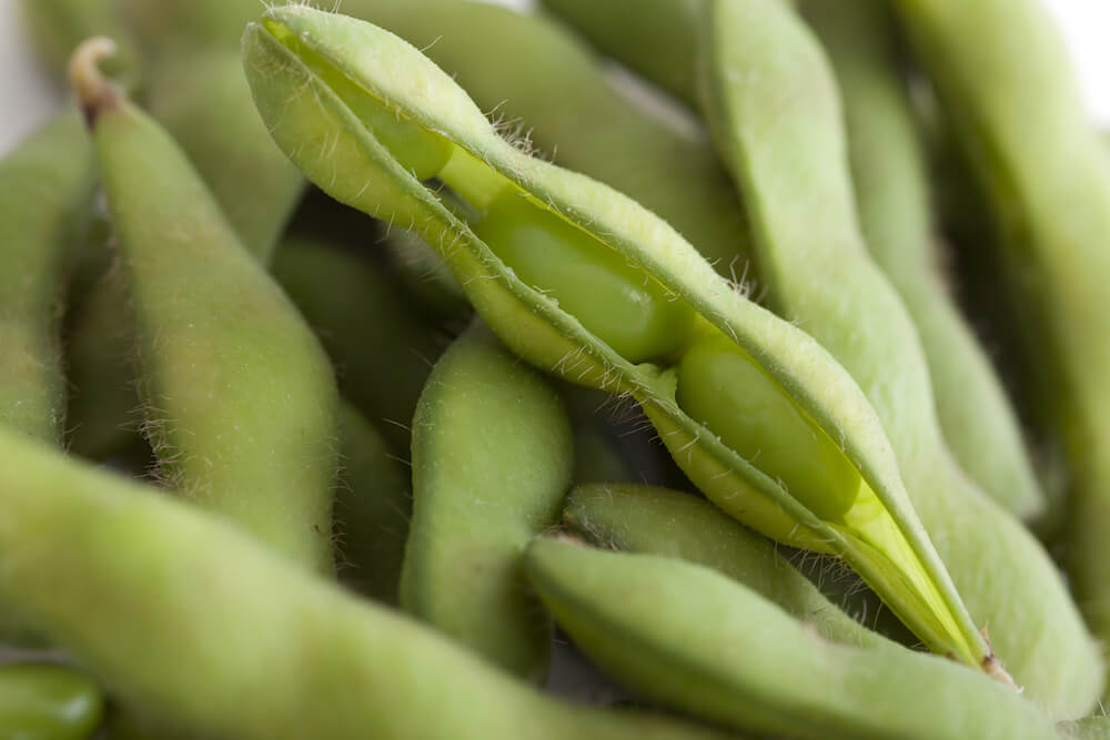 Full frame of beautiful, fresh steamed edamame pods with one on top slightly open to view pretty beans inside.
