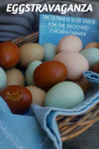 Colorful eggs in a basket.