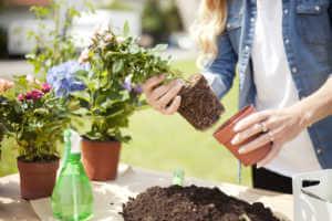 Woman repotting plants outside