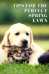 "Dog and cat sitting in the grass with text, ""Tips for the perfect spring lawn"""