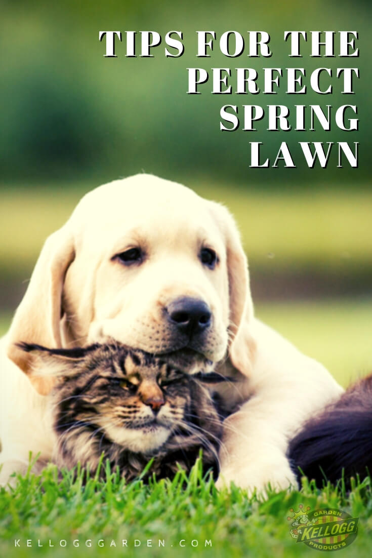 """Dog and cat sitting in the grass with text, """"Tips for the perfect spring lawn"""""""