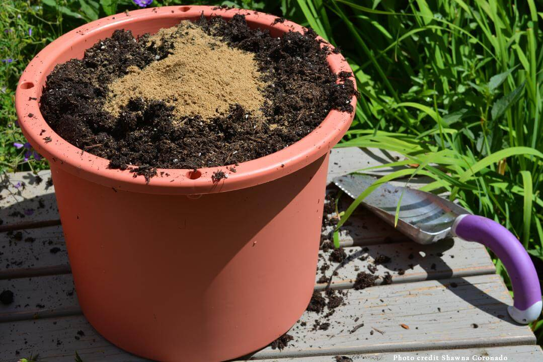 container with soil and fertilizer