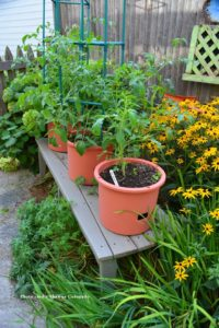 finished tomato container