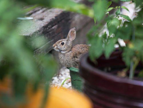Garden Critter Pest Control