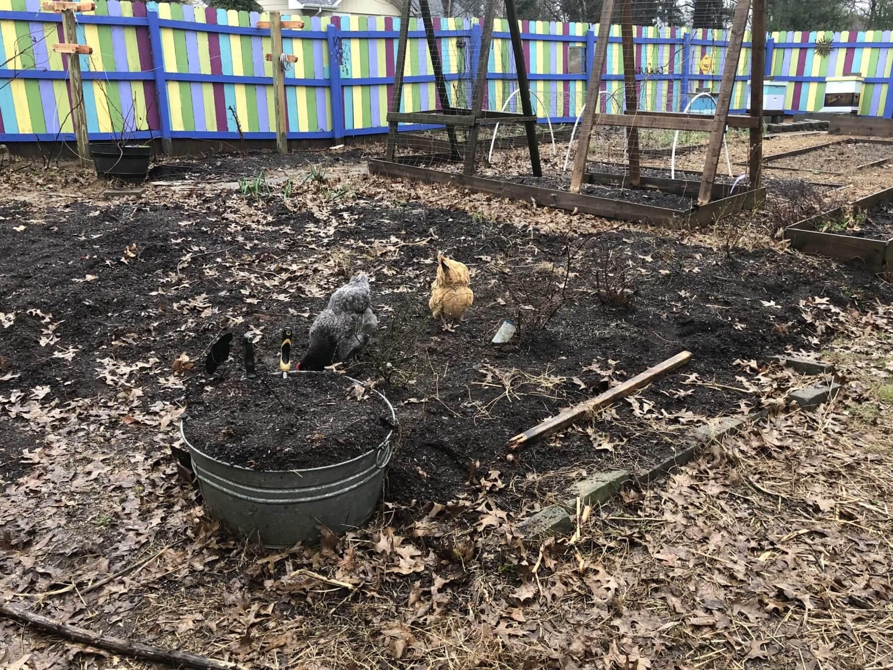 Mia's Garden Makeover
