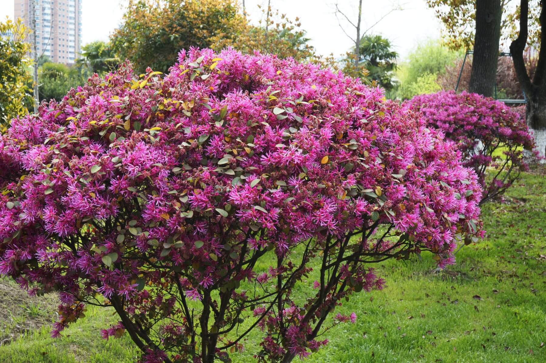 Dont Snub The Shrub 7 Shrub Varieties That Add Color To Your