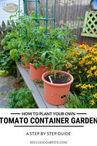 "Row of tomatoes growing in pots with text, ""How to plant your own tomato container garden, step by step guid"""