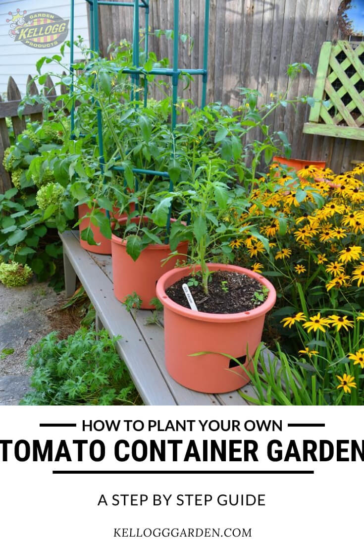 """Row of tomatoes growing in pots with text, """"How to plant your own tomato container garden, step by step guid"""""""