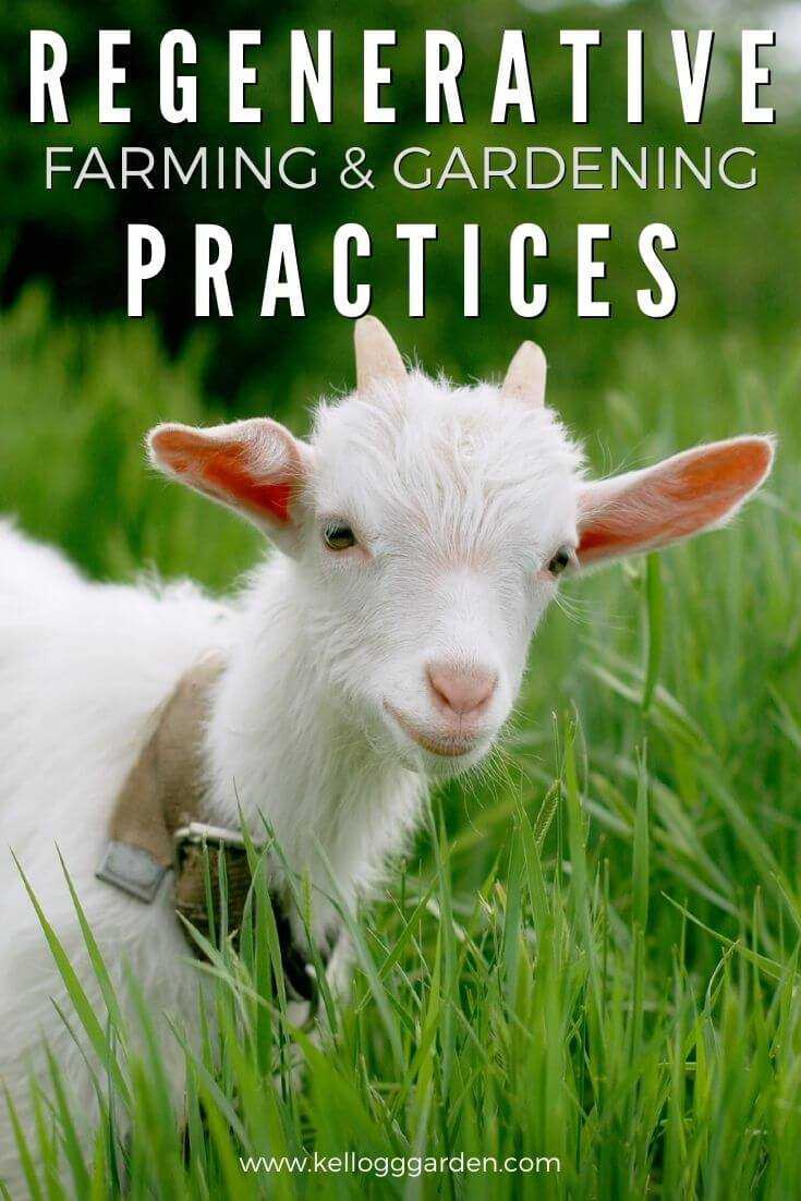 """Small white goat standing in a field of tall grass with text on image, """"Regenerative Farming & Gardening Practices"""""""