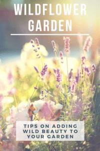 Starting a wildflower garden