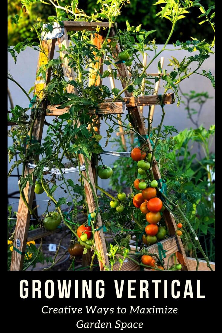 """Vertical tomato garden with text,""""Growing vertical, creative ways to maximize garden space. '"""