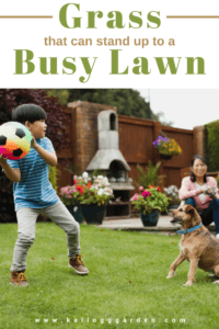 boy with a rainbow soccer ball playing catch with brown dog pinterest image