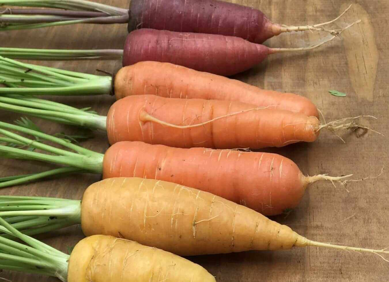 different kinds of carrots