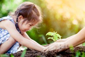 Regenerative-Gardening