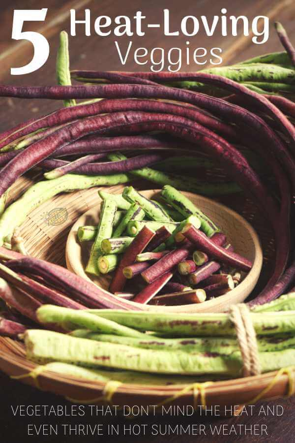 Vegetables that thrive in the heat