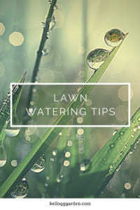 "Wet blades of grass with text, ""Lawn watering tips"""