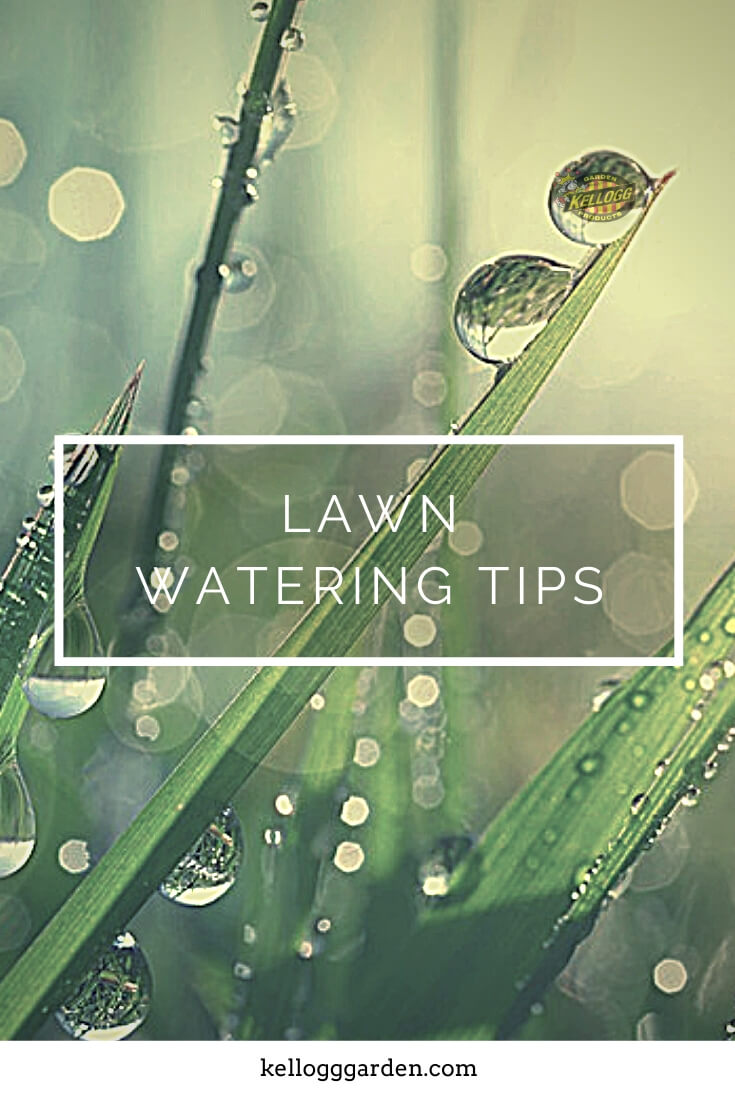 """Wet blades of grass with text, """"Lawn watering tips"""""""