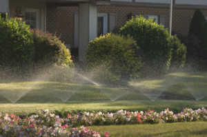 The spray from these lawn sprinklers glowed in the early morning light in this suburban neighborhood. Flower bed in foreground.