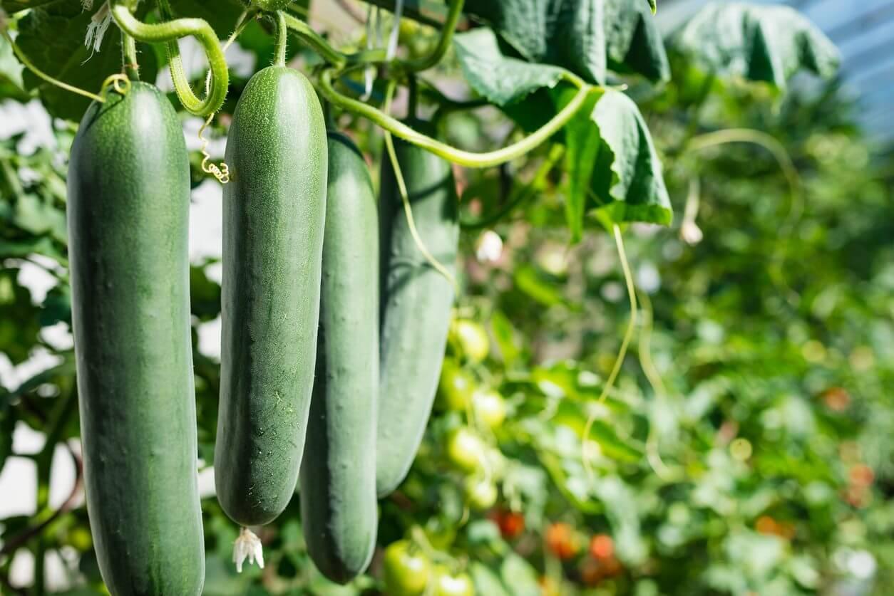 Best Organic Fertilizer - Vegetable Garden | Kellogg Garden Organics™