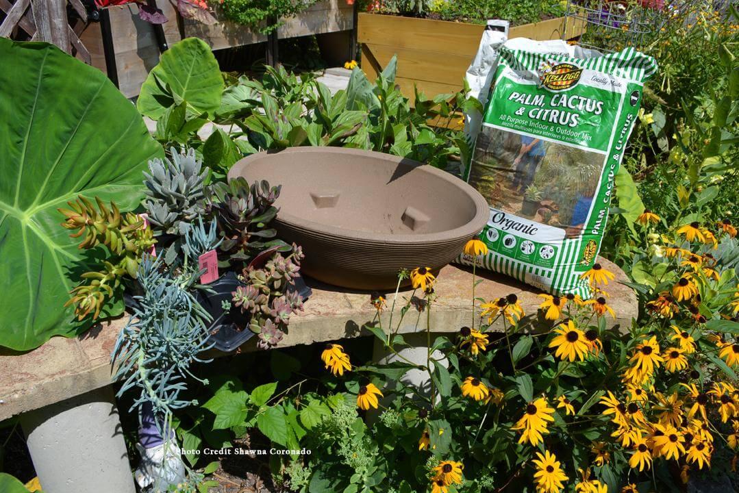 Plant Your Own Succulent Container Garden Kellogg Garden Organics