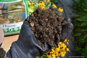 Succulent Soil Drainage