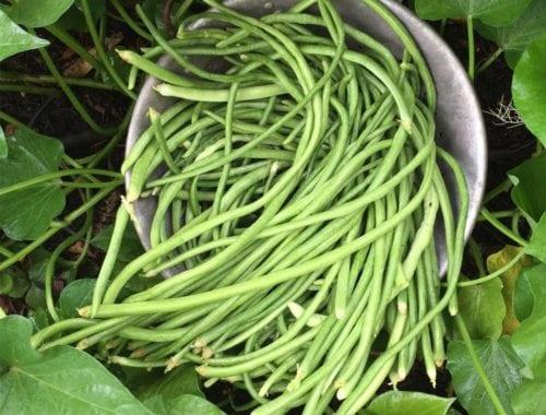 asparagus beans
