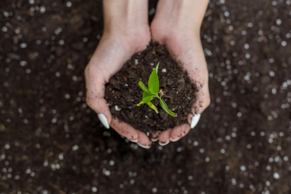 Hands holding soil with a plant