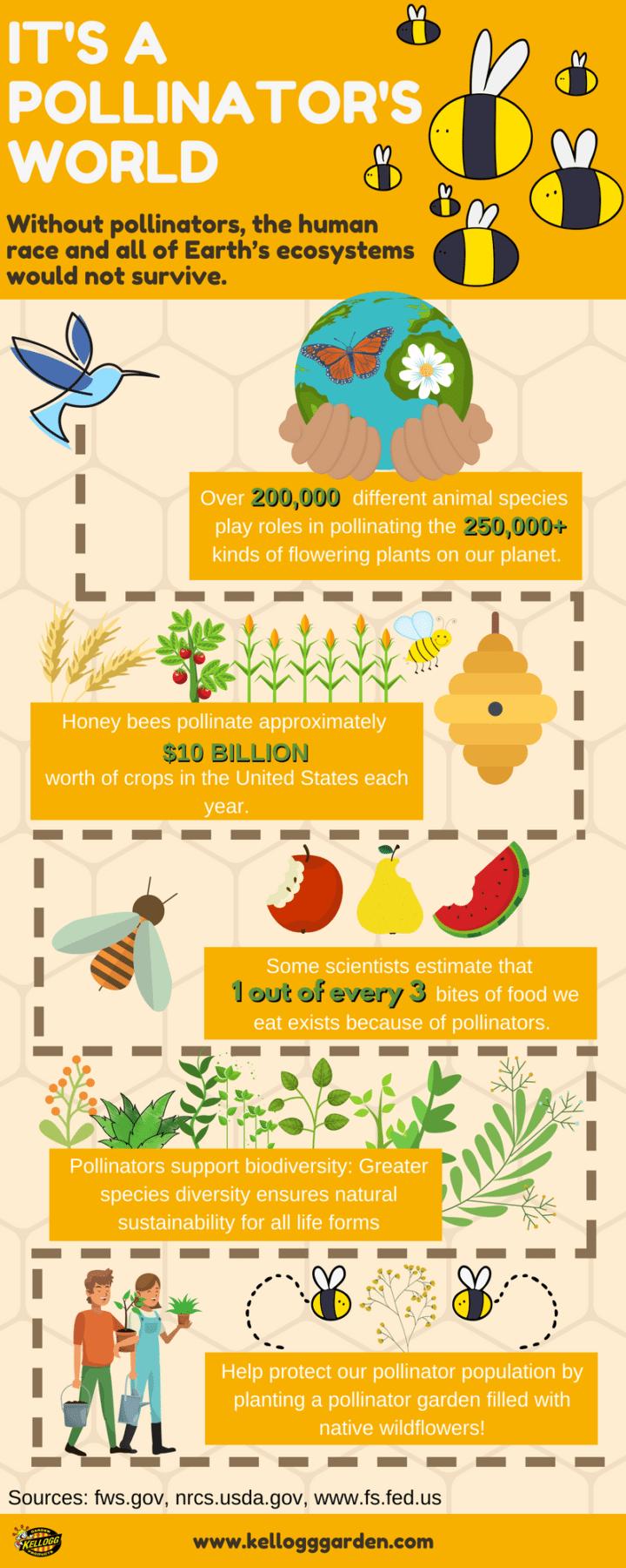 pollinator-infographic