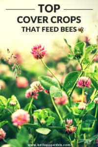 Cover crop with bees flying image for pinterest