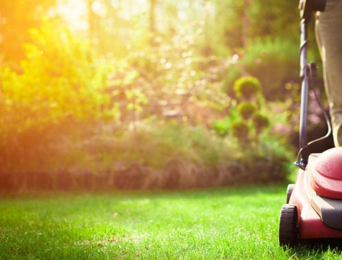 5 tips to keep your lawn green in summer