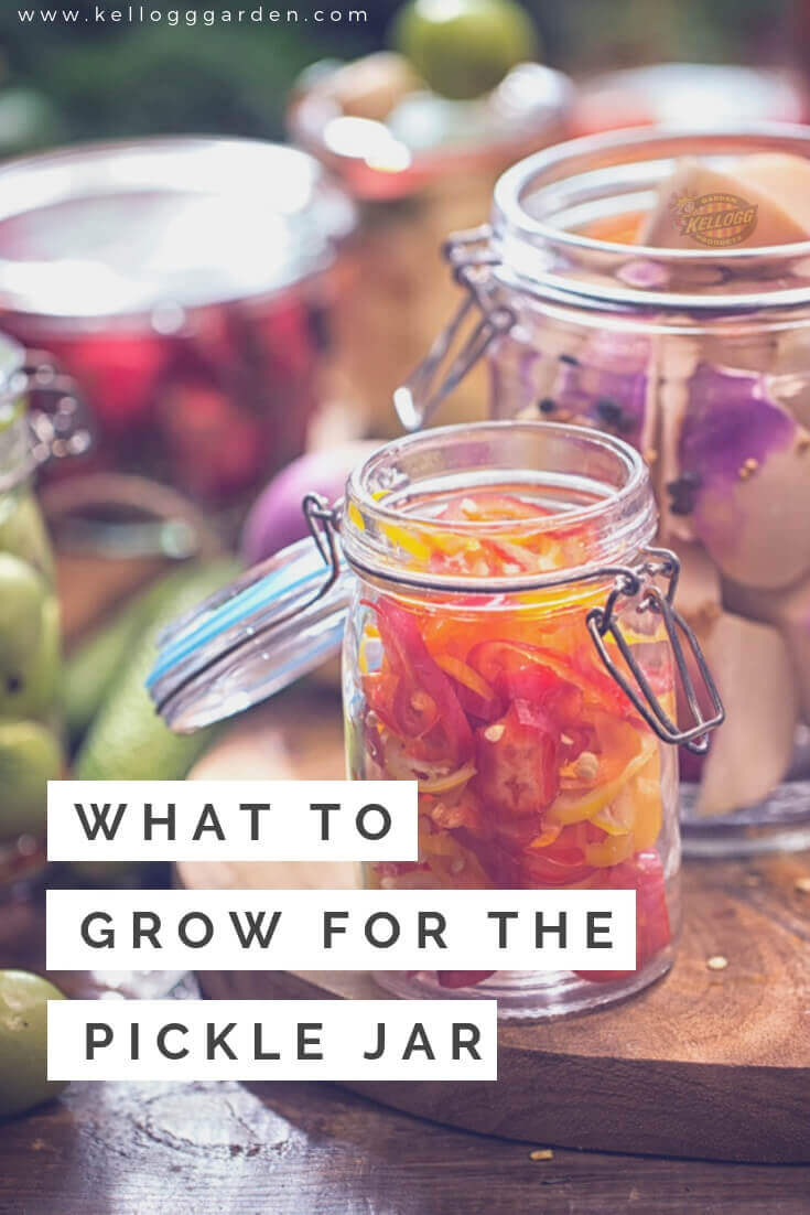 What to grow for the pickle jar