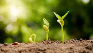 germinating seed to sprout