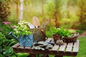 July garden happenings