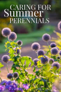 "Purple perennial bush with text, ""Caring for summer perennials"""
