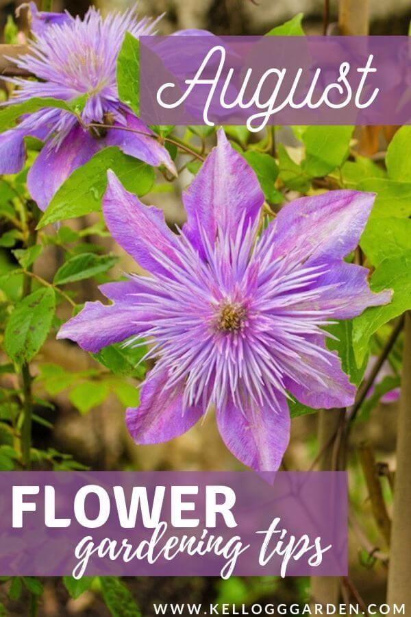 August flower tips