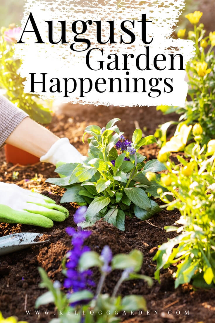 """Lady planting in the garden with text, """"August garden happenings"""""""