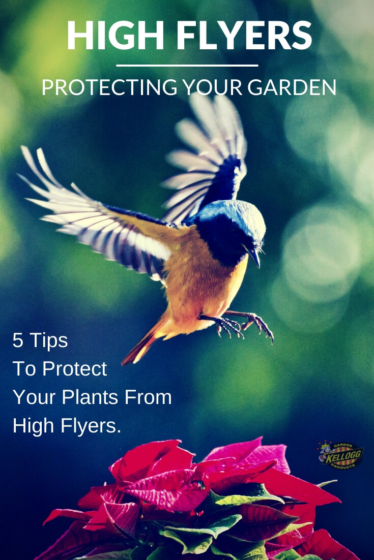 "Bird landing on plant with text, ""High fliers, ortectin your garden. 5 tips to protect your plants form high flyers."""